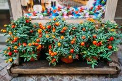 Φρέσκα υγιή φρούτα και λαχανικά οργανικής τροφής στην αγορά στοκ εικόνα