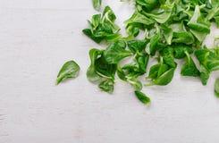 Φρέσκα υγρά φύλλα της σαλάτας καλαμποκιού Στοκ εικόνα με δικαίωμα ελεύθερης χρήσης