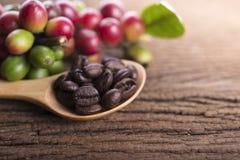 Φρέσκα φασόλια καφέ και ψημένο arabica φασολιών καφέ ισχυρό μίγμα Στοκ φωτογραφίες με δικαίωμα ελεύθερης χρήσης