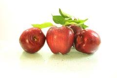Φρέσκα φρούτα και φύλλα μήλων Στοκ Εικόνες