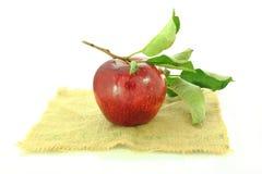Φρέσκα φρούτα μήλων Στοκ φωτογραφία με δικαίωμα ελεύθερης χρήσης