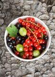 Φρέσκα φρούτα μούρων στο υπόβαθρο κύπελλων στοκ εικόνες