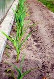 φρέσκα φυτά Στοκ φωτογραφία με δικαίωμα ελεύθερης χρήσης