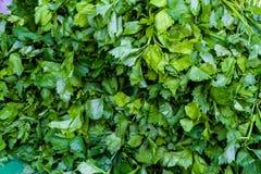 φρέσκα φύλλα κορίανδρου Στοκ Εικόνες