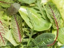 Φρέσκα φύλλα σπανακιού και πράσινος πύραυλος σαλάτας arugula, πράσινο φυσικό υπόβαθρο arugula Στοκ Εικόνες