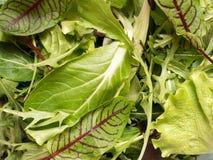 Φρέσκα φύλλα σπανακιού και πράσινος πύραυλος σαλάτας arugula, πράσινο φυσικό υπόβαθρο arugula Στοκ φωτογραφίες με δικαίωμα ελεύθερης χρήσης