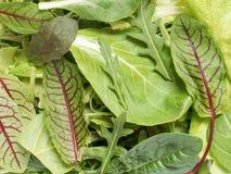 Φρέσκα φύλλα σπανακιού και πράσινος πύραυλος σαλάτας arugula, πράσινο φυσικό υπόβαθρο arugula Στοκ εικόνα με δικαίωμα ελεύθερης χρήσης
