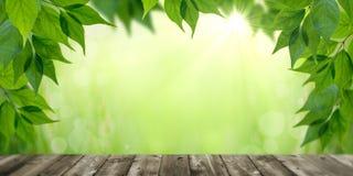 Φρέσκα φύλλα στην άνοιξη ελεύθερη απεικόνιση δικαιώματος