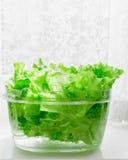 Φρέσκα φύλλα μαρουλιού που ενυδατώνονται στο διαφανές πλαστικό κύπελλο Στοκ Φωτογραφίες