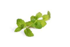 Φρέσκα φύλλα μεντών, που απομονώνονται στο άσπρο υπόβαθρο στοκ εικόνες