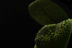 Φρέσκα φύλλα Στοκ Φωτογραφίες