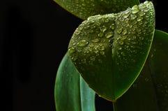 Φρέσκα φύλλα Στοκ Φωτογραφία