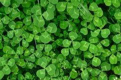 Φρέσκα φύλλα στοκ εικόνα