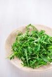Φρέσκα φύλλα arugula στο πιάτο Στοκ Εικόνες