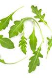 Φρέσκα φύλλα rucola Στοκ Εικόνα
