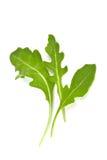 Φρέσκα φύλλα rucola Στοκ Εικόνες