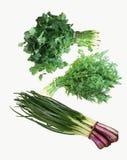 φρέσκα χορτάρια κήπων Σύνολο πράσινης φυλλώδους οργανικής τροφής άνοιξη con Στοκ εικόνες με δικαίωμα ελεύθερης χρήσης