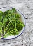 Φρέσκα χορτάρια κήπων - arugula, chard, μαϊντανός, cilantro, σε ένα άσπρο πιάτο σμάλτων Στοκ Εικόνα
