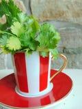 Φρέσκα χορτάρια κορίανδρου σε ένα καλό κόκκινο και άσπρο ριγωτό φλυτζάνι Στοκ Εικόνες