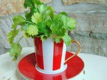 Φρέσκα χορτάρια κορίανδρου σε ένα καλό κόκκινο και άσπρο ριγωτό φλυτζάνι Στοκ Φωτογραφίες