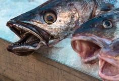 Φρέσκα ψάρια βακαλάων για την πώληση πέρα από τον πάγο Στοκ Φωτογραφίες