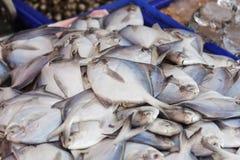 Φρέσκα ψάρια, θαλασσινά Στοκ Εικόνες