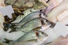 Φρέσκα ψάρια και θαλασσινά που δροσίζονται με τον πάγο σε μια fishmongers πλάκα στοκ εικόνες