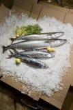 Φρέσκα ψάρια μιγμάτων στο μπαμπού γύρω από το δίσκο με τα φρέσκα λαχανικά με τον πάγο στο καφετί υπόβαθρο στοκ φωτογραφίες