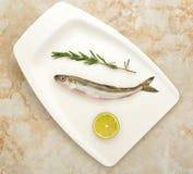 Φρέσκα ψάρια οσμηρών Στοκ Εικόνα