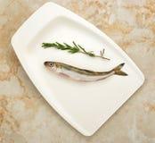 Φρέσκα ψάρια οσμηρών Στοκ Φωτογραφίες