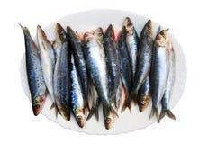 Φρέσκα ψάρια σαρδελλών στο άσπρο πιάτο, που απομονώνεται στοκ εικόνες