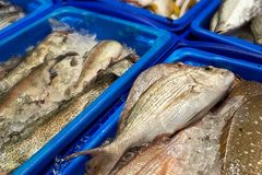 Φρέσκα ψάρια στην αγορά ψαριών Στοκ εικόνες με δικαίωμα ελεύθερης χρήσης