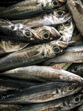 Φρέσκα ψάρια στην αγορά ψαριών Aljezur Στοκ Εικόνες