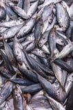 Φρέσκα ψάρια στην αγορά Στοκ Φωτογραφία
