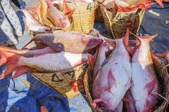 Φρέσκα ψάρια στο καλάθι στην παραλία Στοκ φωτογραφίες με δικαίωμα ελεύθερης χρήσης
