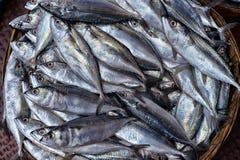 Φρέσκα ψάρια στο ψάθινο κύπελλο Στοκ Εικόνες