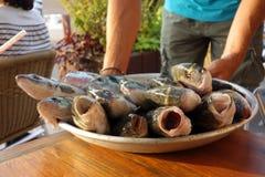 Φρέσκα ψάρια Στοκ εικόνες με δικαίωμα ελεύθερης χρήσης