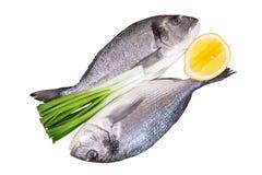 Φρέσκα ψάρια dorado που απομονώνονται σε ένα λευκό στοκ φωτογραφία με δικαίωμα ελεύθερης χρήσης