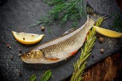 Φρέσκα ψάρια IDE σε μια μαύρη πλάκα πετρών που περιβάλλεται κοντά Στοκ Εικόνα