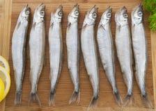Φρέσκα ψάρια Shishamo Στοκ φωτογραφία με δικαίωμα ελεύθερης χρήσης