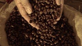 Φρέσκα ψημένα φασόλια καφέ που χύνουν έξω των κοίλων χεριών σε έναν burlap σάκο απόθεμα βίντεο