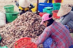 Φρέσκα όστρακα κοχυλιών στην αγορά Βιετνάμ στοκ φωτογραφία με δικαίωμα ελεύθερης χρήσης