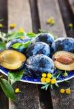 Φρέσκα ώριμα μπλε δαμάσκηνα στο πιάτο Στοκ Φωτογραφία