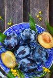 Φρέσκα ώριμα μπλε δαμάσκηνα στο πιάτο Στοκ φωτογραφίες με δικαίωμα ελεύθερης χρήσης