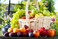 Φρέσκα ώριμα οργανικά φρούτα στον κήπο ισορροπημένο σιτηρέσιο Στοκ Εικόνες