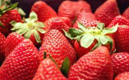 Φρέσκα ώριμα strawberrys για το ευτυχές γεύμα Στοκ Εικόνα