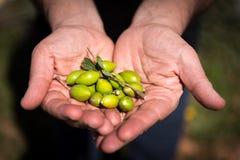 Φρέσκα argan φρούτα Στοκ Εικόνες