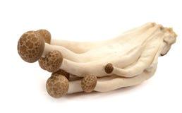 Φρέσκα champignons σε ένα καλάθι σε ένα ξύλινο υπόβαθρο στοκ εικόνες
