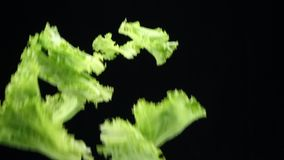 Φρέσκα juicy νέα λαχανικά για το μαγείρεμα στην κουζίνα κρεμμύδια άνοιξης, μαϊντανός και πτώση άνηθου σε σε αργή κίνηση φιλμ μικρού μήκους