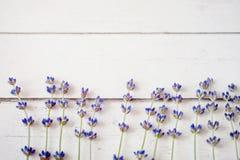 Φρέσκα lavender λουλούδια στο άσπρο ξύλινο επιτραπέζιο υπόβαθρο Στοκ Εικόνες